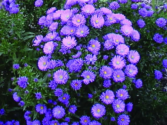 Gardening Tips October 2014